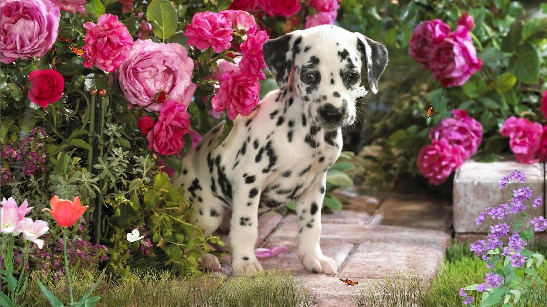 Lovely Dogs Screensaver