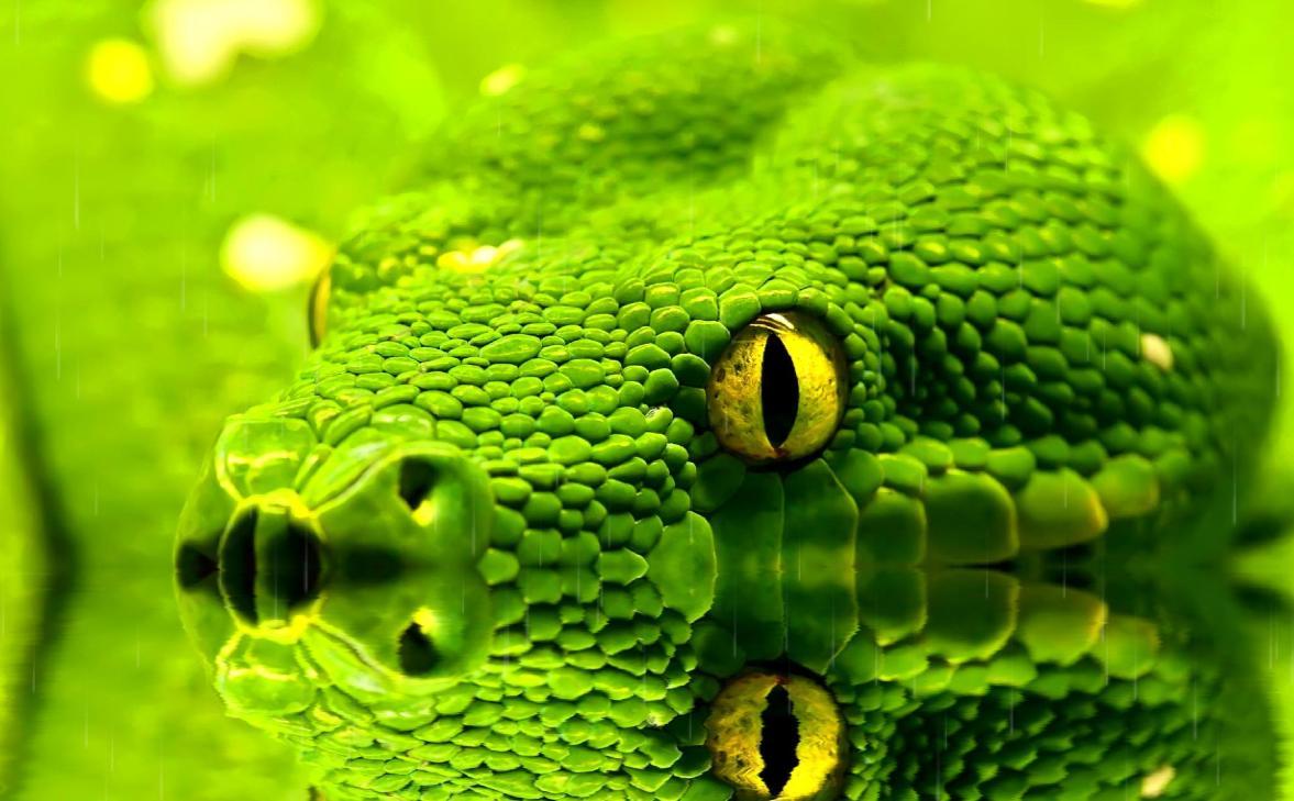 Snakes Screensaver