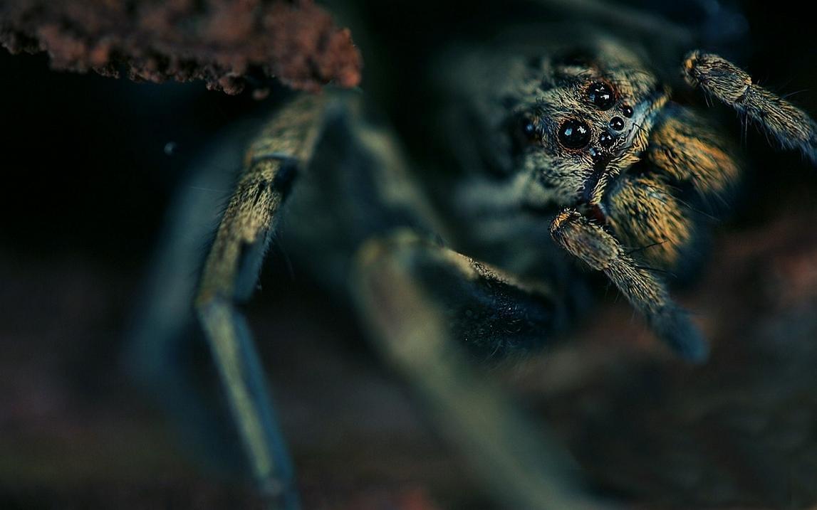 Spider World Screensaver