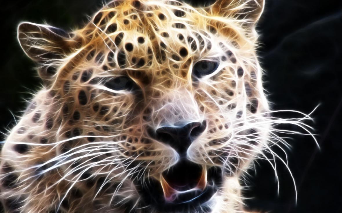 Wild Animal Screensaver