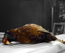 dead whole pheasant on counter top in Borough market. Black and white background