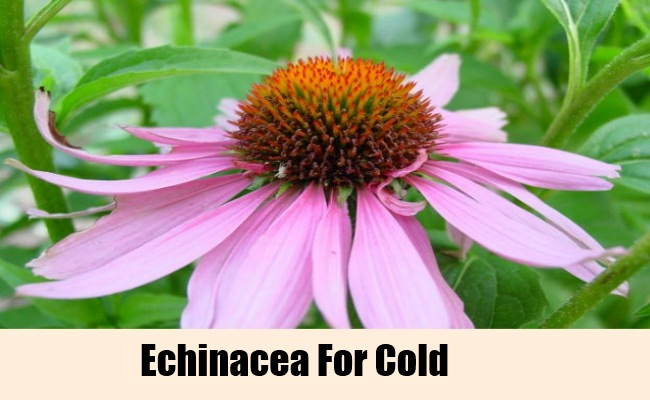 13 herbal remedies for cold cold treatments search herbal home remedy. Black Bedroom Furniture Sets. Home Design Ideas