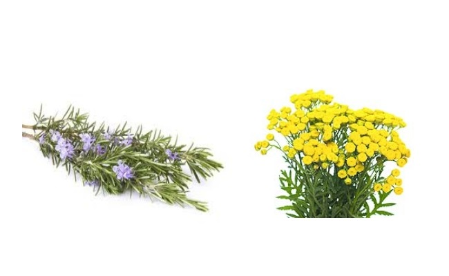 Rosemary And Tansy Skin Wash