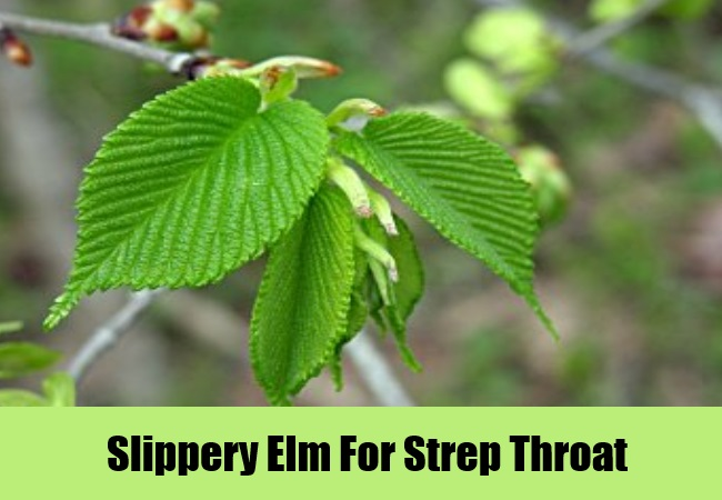 Slippery Elm For Strep Throat