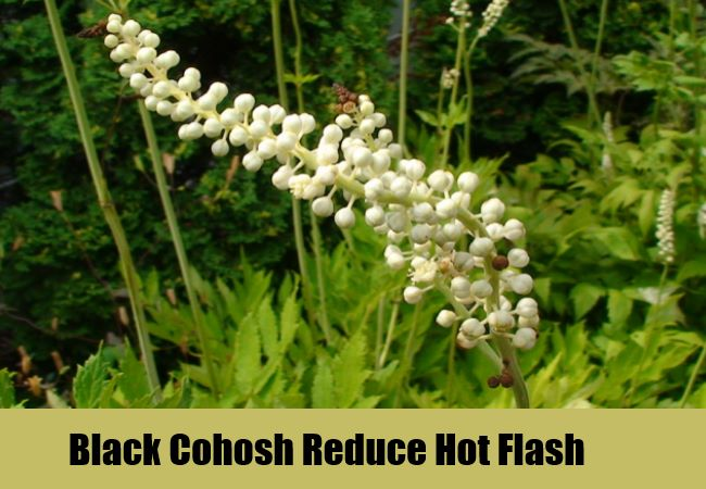 Black Cohosh Reduce Hot Flash