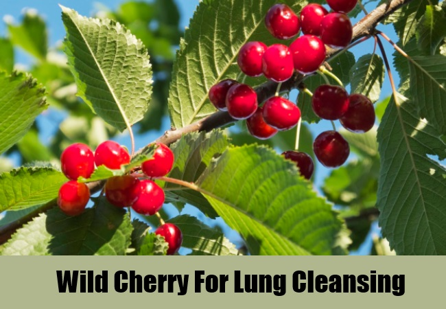 Wild Cherry For Lung Cleansing