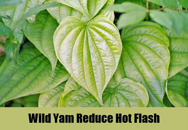 Wild Yam Reduce Hot Flash