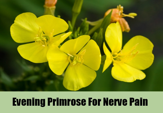 Evening Primrose For Nerve Pain