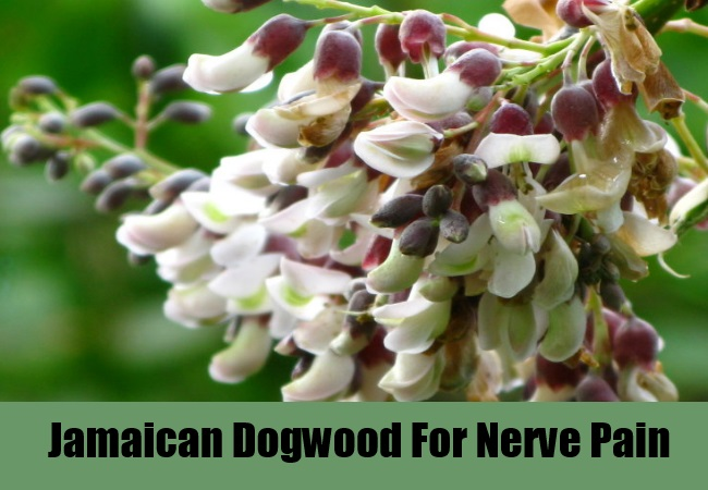 Jamaican Dogwood For Nerve Pain