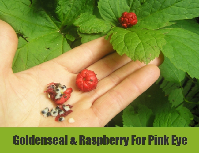 Goldenseal & Raspberry For Pink Eye