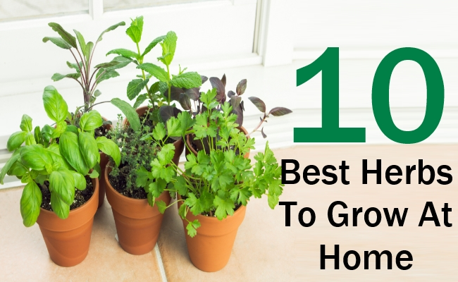 10 Best Herbs To Grow At Home