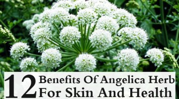Benefits Of Angelica Herb For Skin And Health
