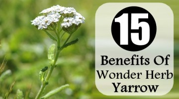 Benefits Of Wonder Herb Yarrow