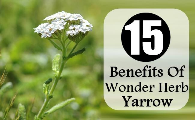 Benefits Of Wonder Herb Yarrow