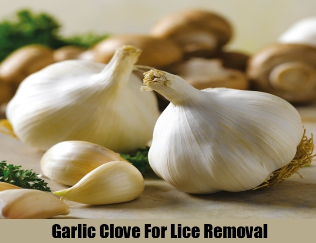 Garlic Clove For Lice Removal