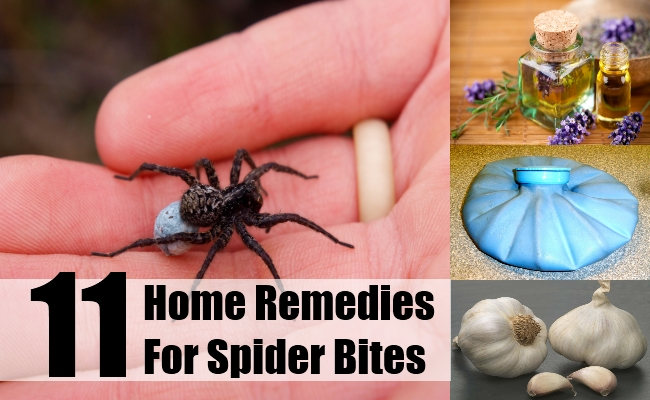 How to Identify a Spider Bite 7 Steps with Pictures