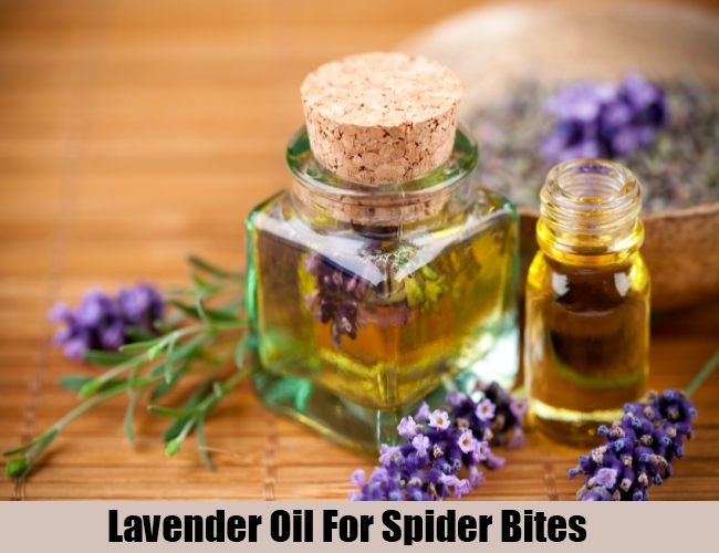 Lavender Oil For Spider Bites