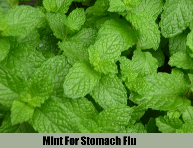 Mint For Stomach Flu