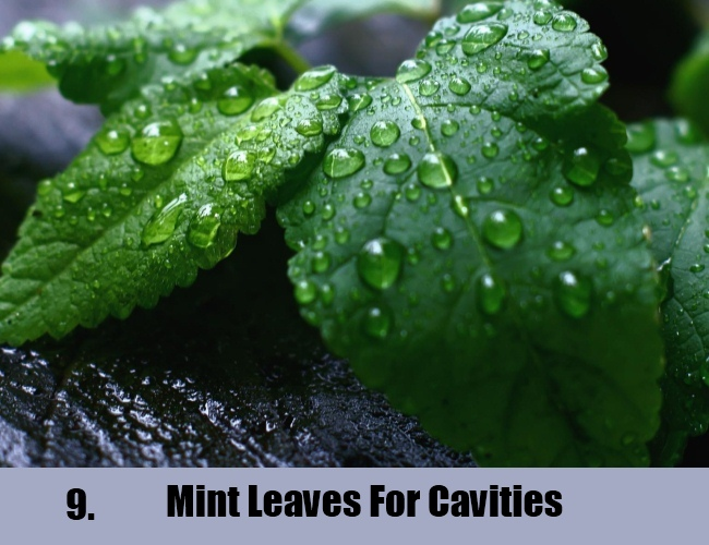 Mint Leaves For Cavities