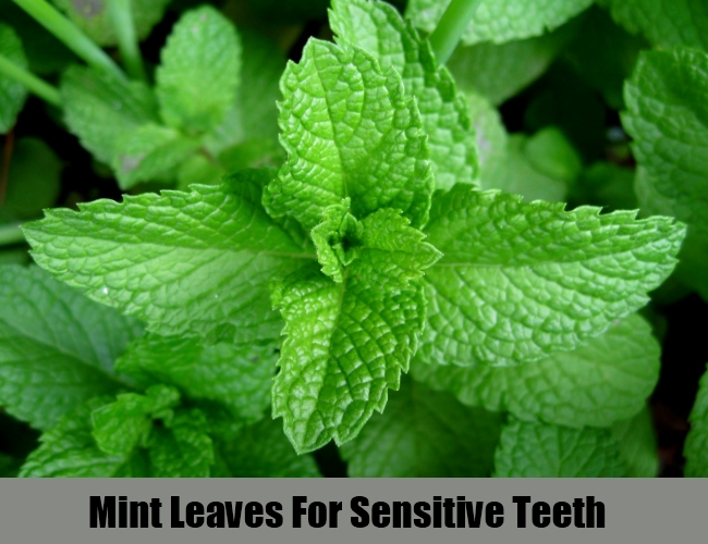 Mint Leaves For Sensitive Teeth