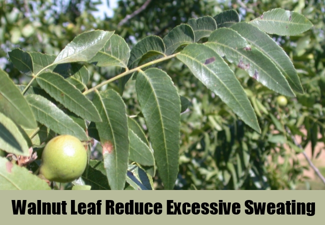 Walnut Leaf Reduce Excessive Sweating