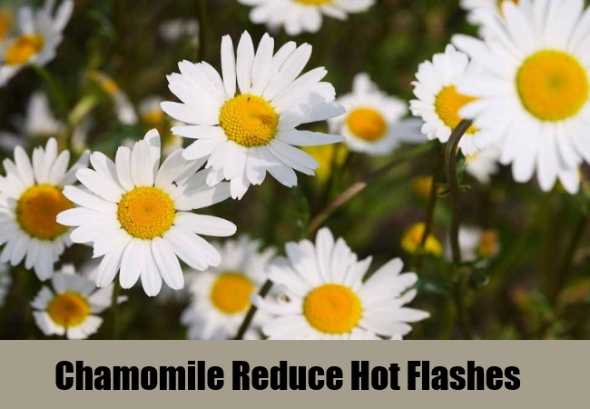 Chamomile Reduce Hot Flashes