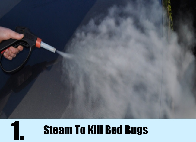 Steam To Kill Bed Bugs