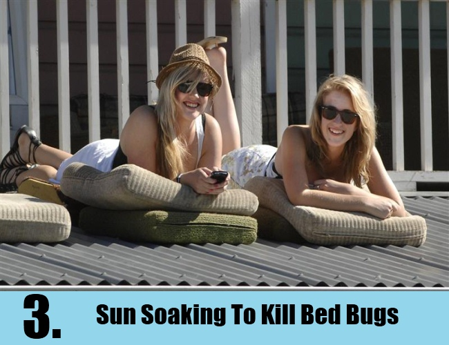 Sun Soaking To Kill Bed Bugs