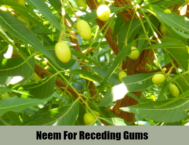 Neem For Receding Gums