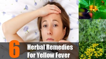 Herbal Remedies For Yellow Fever