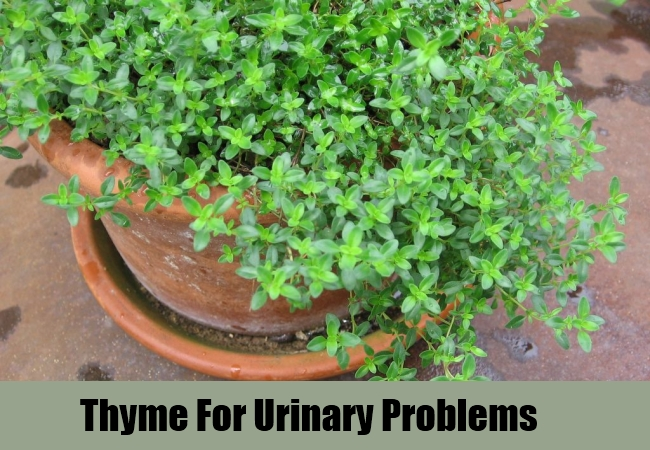 Thyme For Urinary Problems