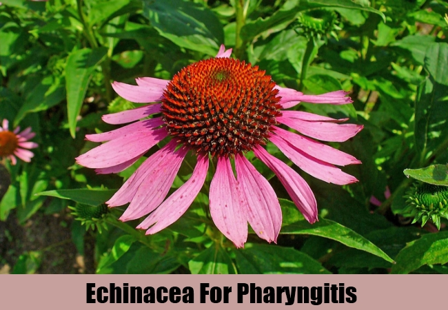 Echinacea For Pharyngitis