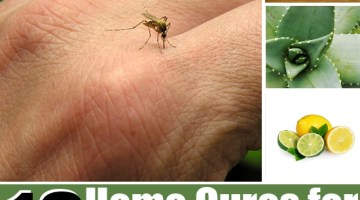 Home Cures For Mosquito Bite Itch