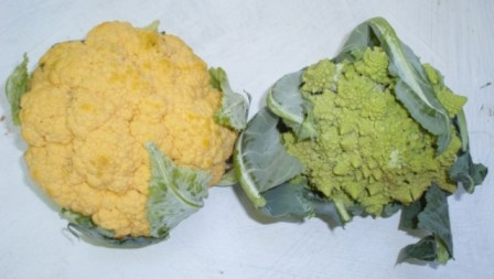 cauliflower and romanesco broccoli