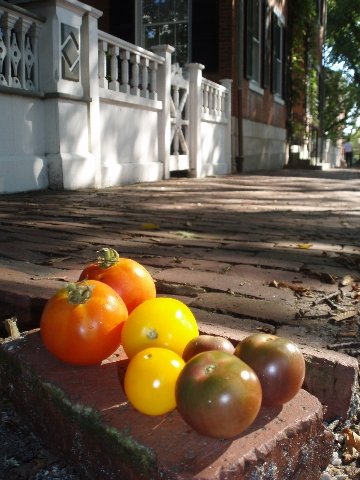 tomatoes on Main Street