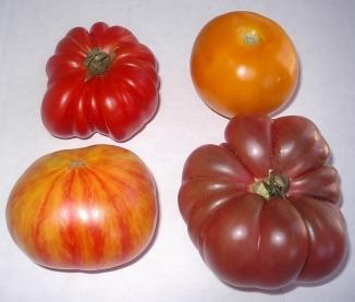 heirloom-tomaotes-07-23-05c