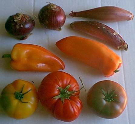 onions-tomatoes-peppers-072305j