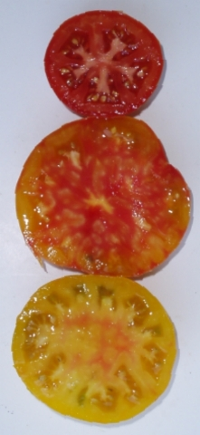dry farmed early girl tomato