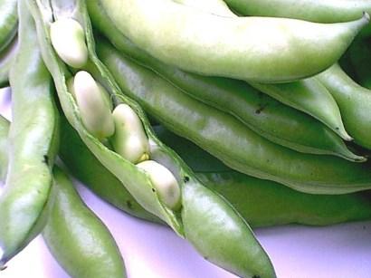 fava-beans-030602
