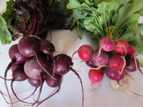 11-07-14 beets and radishes