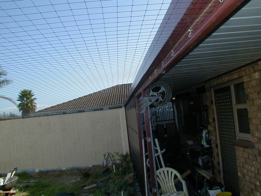 outdoor cat enclosure brisbane paws playhouse cat run backyard