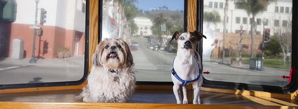 Dog-friendly Ventura trolley