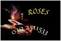 roses foto