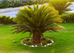 sago-palm-poisoning-dogs
