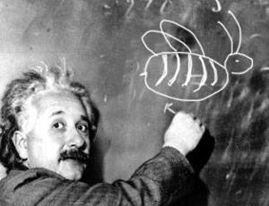 Einstein Bee