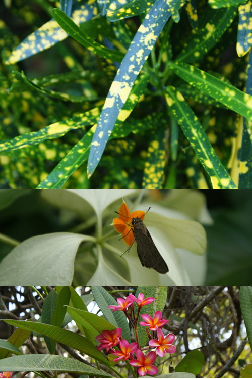 blog voyage whv australie darwin backpacker expat botanic flower flore fleur