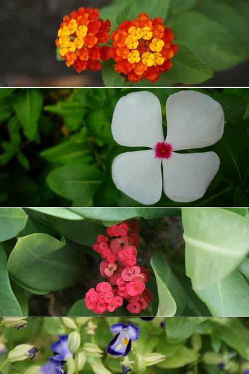 blog voyage whv australie darwin backpacker expat flower fleur flore