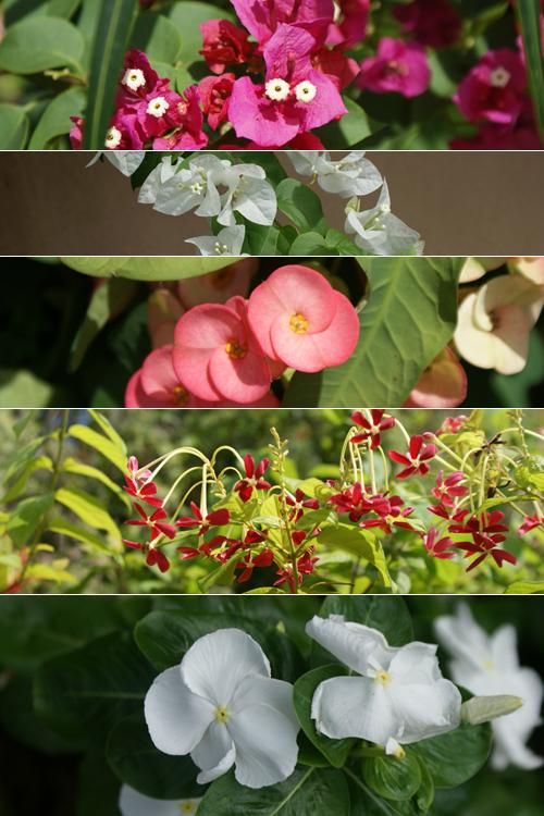 blog voyage whv australie darwin backpacker expat fleur flower flore insolite botanic