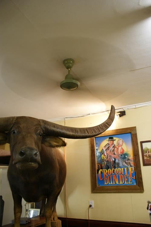 blog voyage australie australia whv backpacker restaurant buffalo