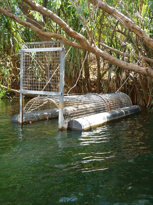 blog voyage australie australia whv backpacker crocodile trap river katherine